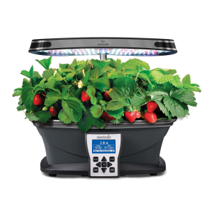Grow fresh strawberries right on your kitchen counter