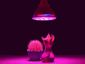TaoTronics LED Grow light Bulb